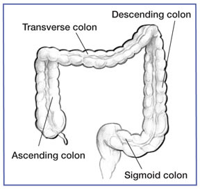 What Does the Colon do in the Digestive System | Healthy Living ...